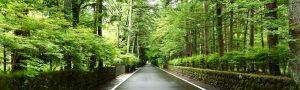 旧軽井沢梅雨の風景